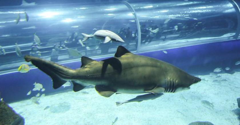 The aquarium  ©Fernando Maia   Riotur;Flickr