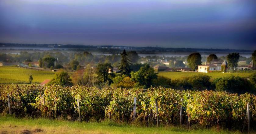 Vineyard, Bordeaux   © Blaye Côtes de Bordeaux/Flickr
