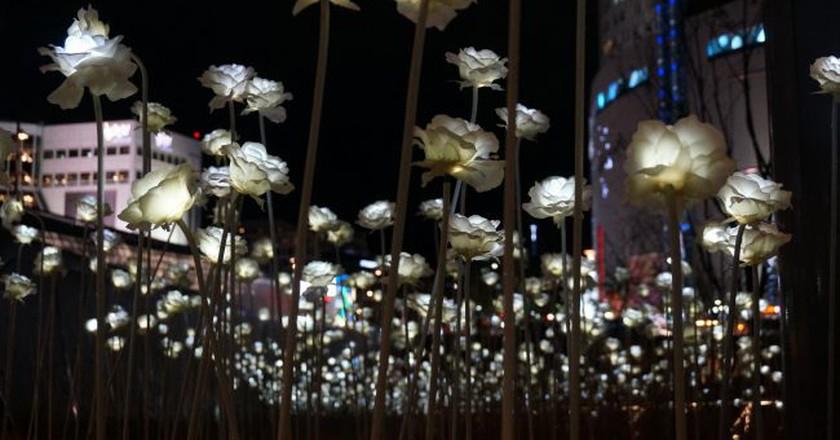 Dongdaemun Design Plaza LED Rose Garden | © wjl_yyc / Flickr