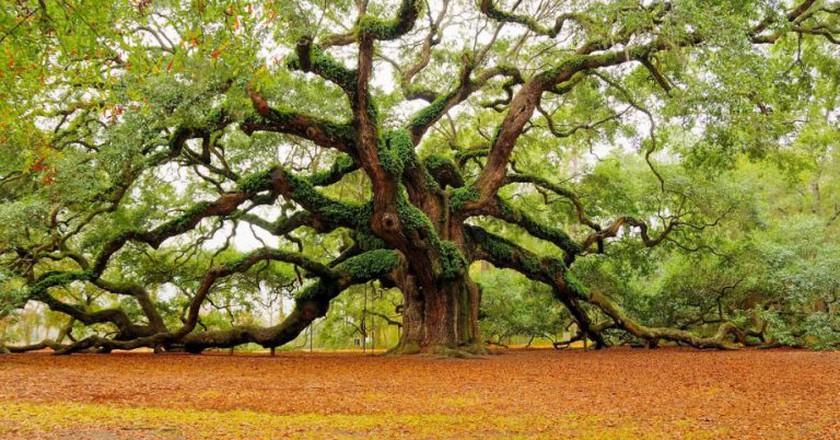 Tree   © Marvin Foushee/Flickr