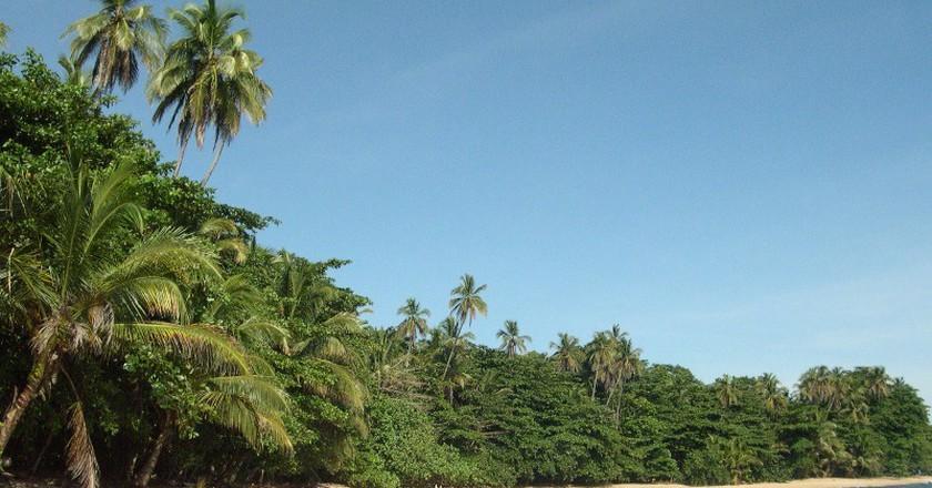 The captivating Caribbean Courtesy of Tree House Lodge