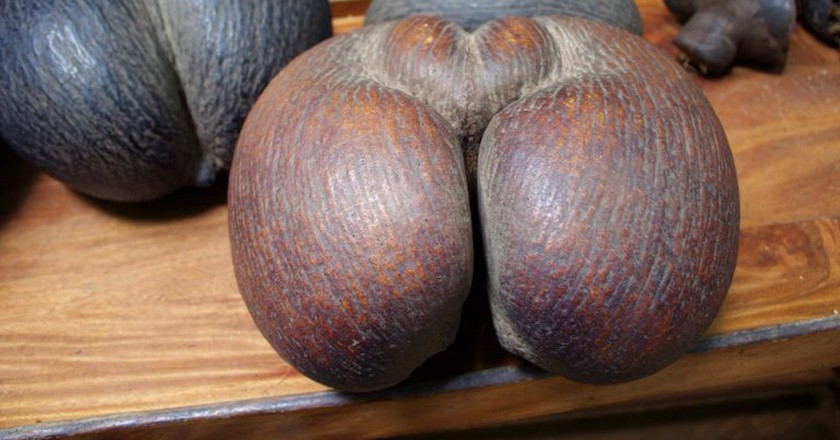 The worlds largest (and cheekiest) nut the Coco de Mer | ©Chantelle Howell