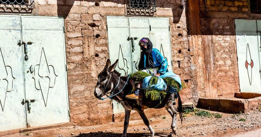 A Moroccan donkey carrying a lady and greenery | © Mario Micklisch/Flickr