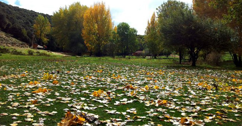 Colourful fallen leaves scattered across the grass in Ifrane   © Soufiane M / Flickr