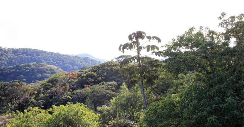 Jungle as far as the eye can see © Donna Boley/Flickr