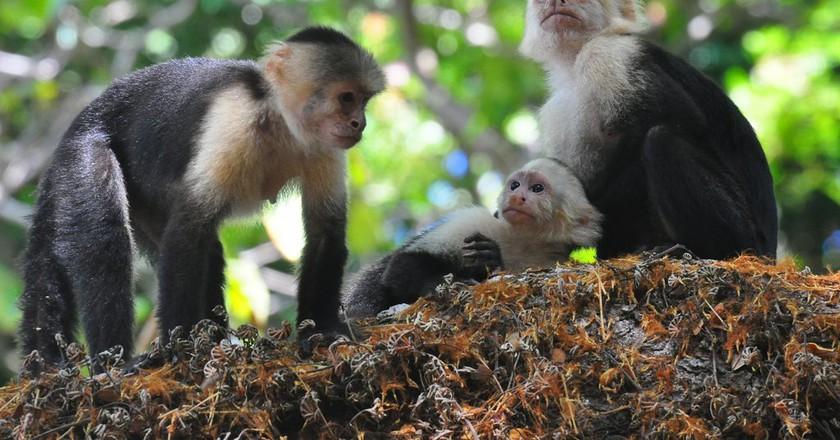 Monkey around in Costa Rica | © kansasphoto/Flickr