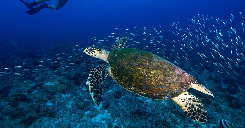 Diving with turtles at North Island   Image courtesy of North Island Resort