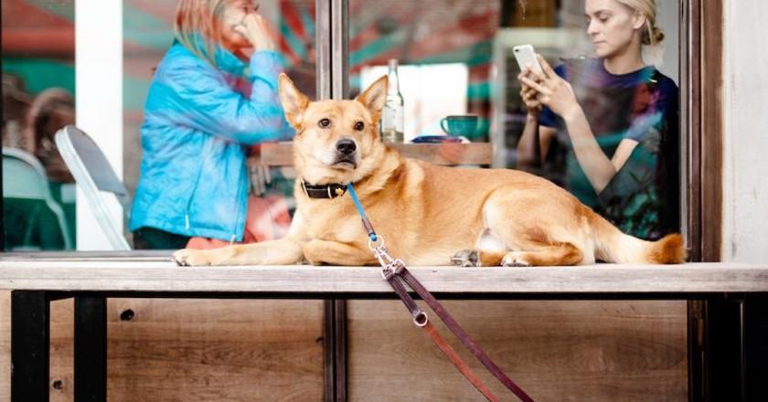 Dog cafe | © Ross Sokolovski/Unsplash