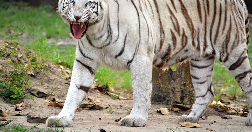 Wildlife India | © Poushali.hazra / Wikimedia Commons