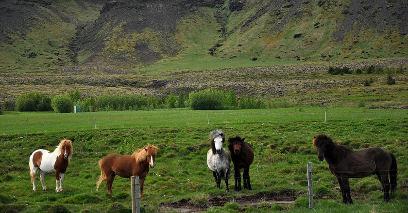 A Guide to Horse Riding in Iceland