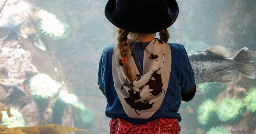 Mesmerised at Vancouver Aquarium |  © Girl Guides of Canada / Flickr