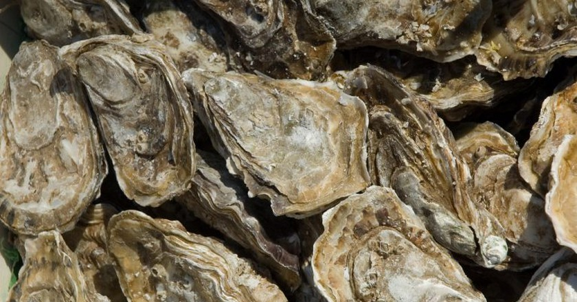 Oysters   © Paul Asman and Jill Lenoble / Flickr