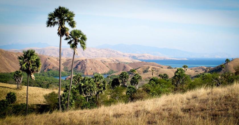 Komodo Island landscape   © Andurinha/Flickr