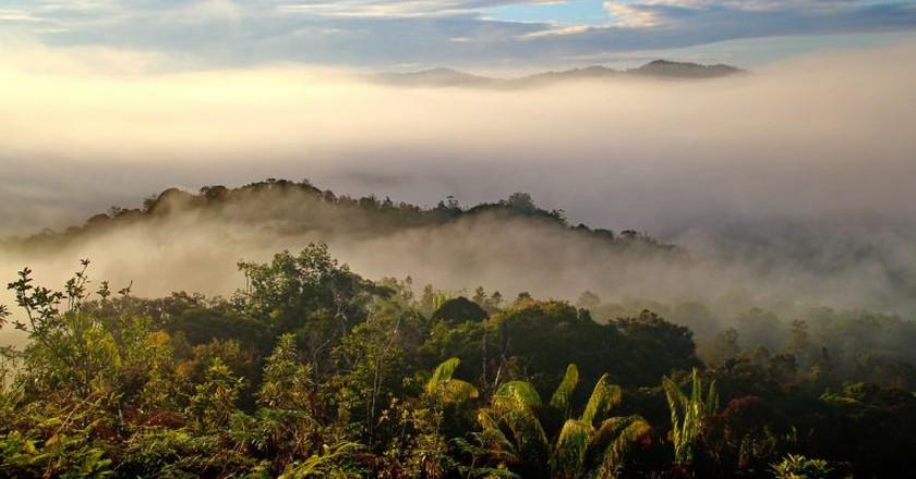 Worth protecting? Borneo's rainforest | © labanglonghouse/ Pixabay