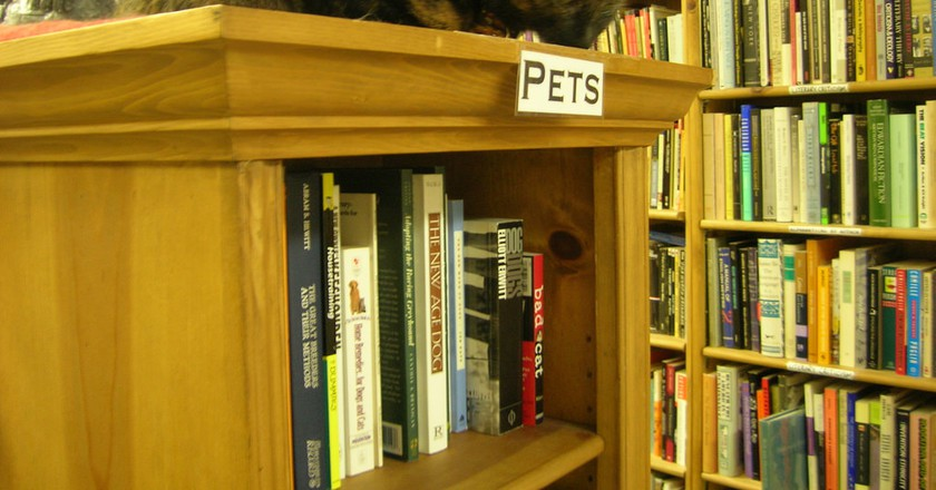 Cat at Ophelia's Books | © brewbooks / Flickr