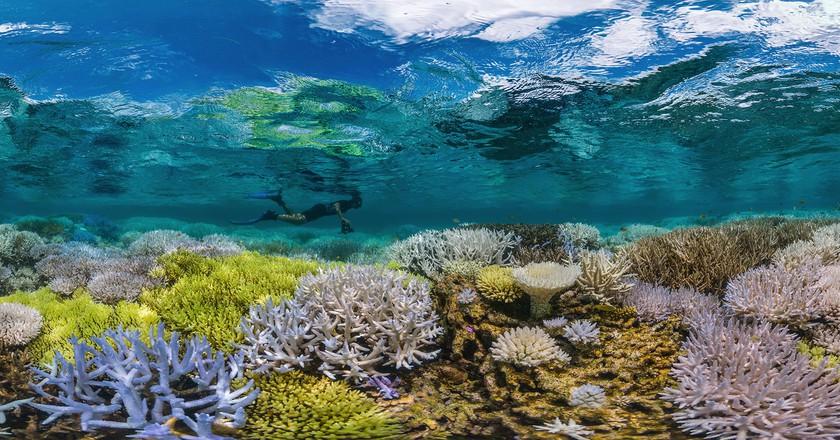Courtesy of The Ocean Agency/XL Catlin Seaview Survey