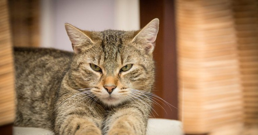 Cat   © Gerhard Bögner/Pixabay