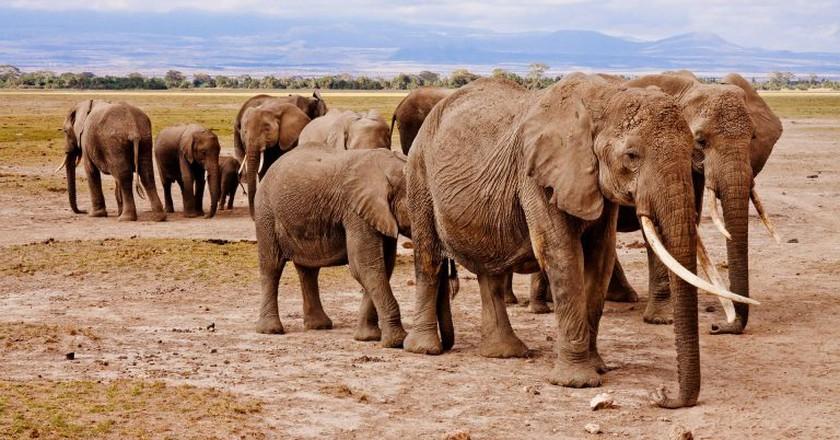 Kenya elephants | © Poswiecie