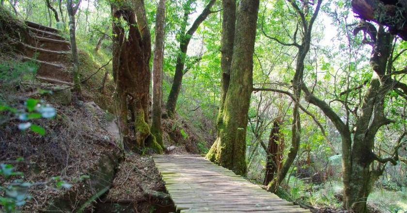 Forest Walk | © Videocraft/Pixabay