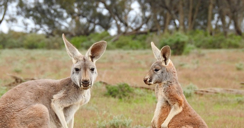 10 Ways to Eat Kangaroo in Australia