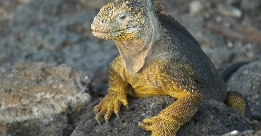 Galapagos | © 4606510/pixabay