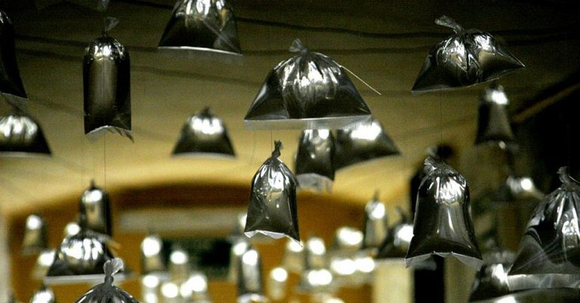 Bags of water hanging from the ceiling | © Matt Murphy