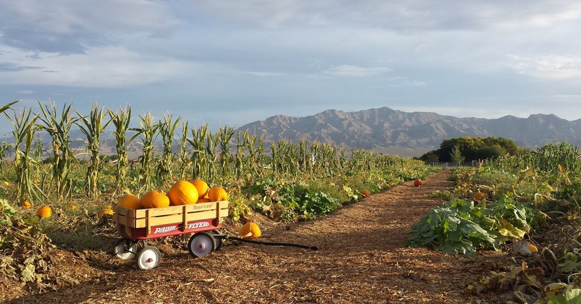 Gilcrease Orchard | Courtesy of Gilcrease Orchard