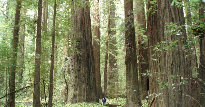 "<a href=""https://www.flickr.com/photos/hms831/2434580343/"" target=""_blank"" rel=""noopener noreferrer"">Redwoods 
