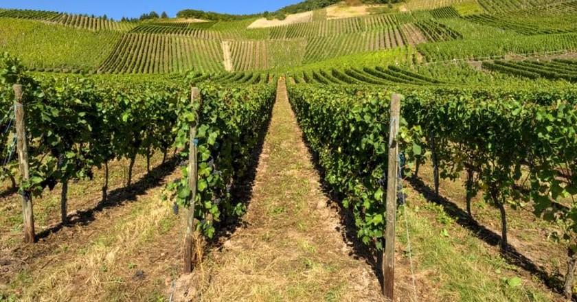 A Moselle vineyard  © LudwigChrist/Shutterstock