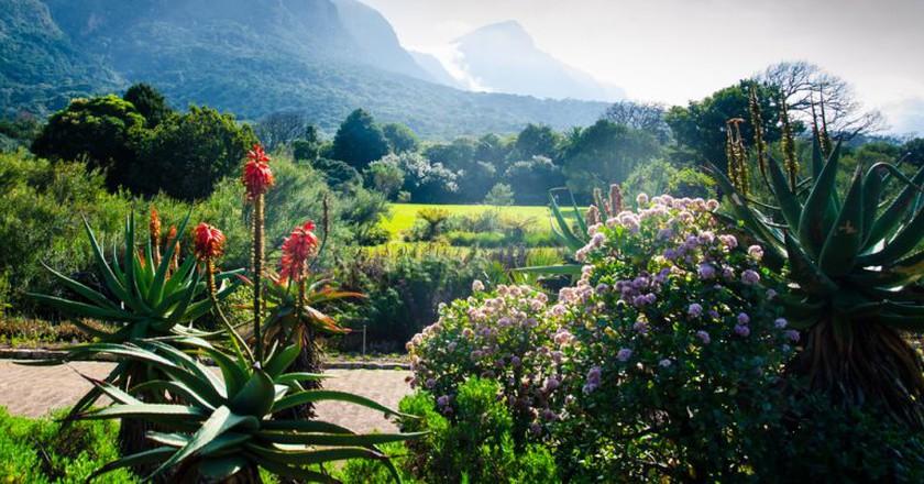 Kirstenbosch Botanical Gardens | © Shutterstock