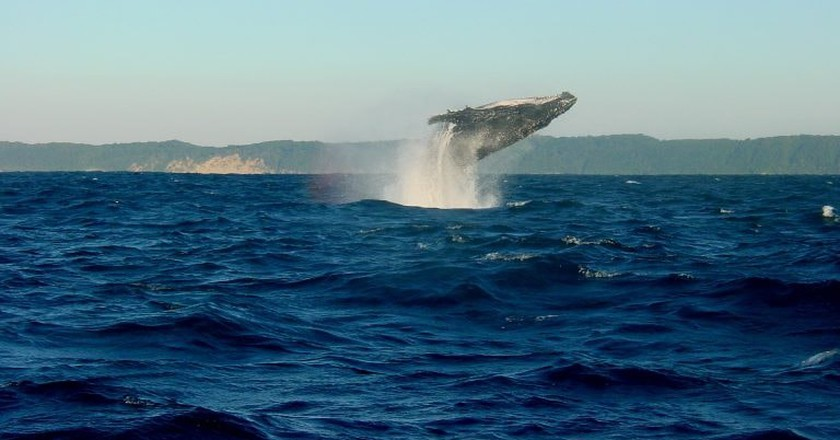 Leaping whale in Iceland | © YanceTAY / Pixabay