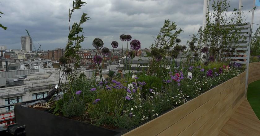 John Lewis Oxford Street Roof Garden | © Loz Pycock/Flickr