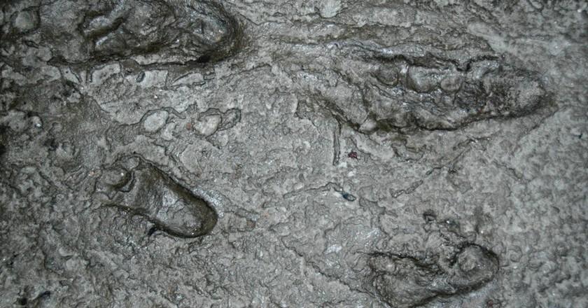 Australopithecus afarensis fossil hominid footprints | © James St. John / Flickr
