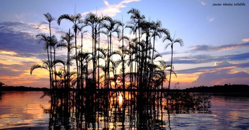 Cuyabeno Wildlife Reserve   © Javier Abalos Alvarez/Flickr