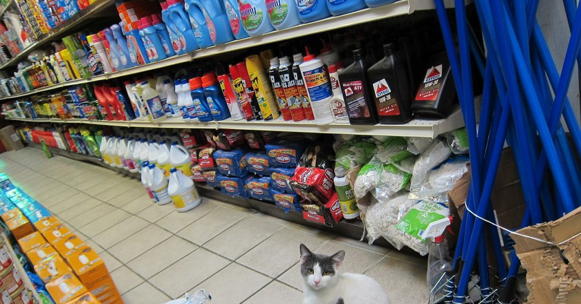 A bodega cat in Greenpoint, Brooklyn | © Seth Werkheiser / Flickr