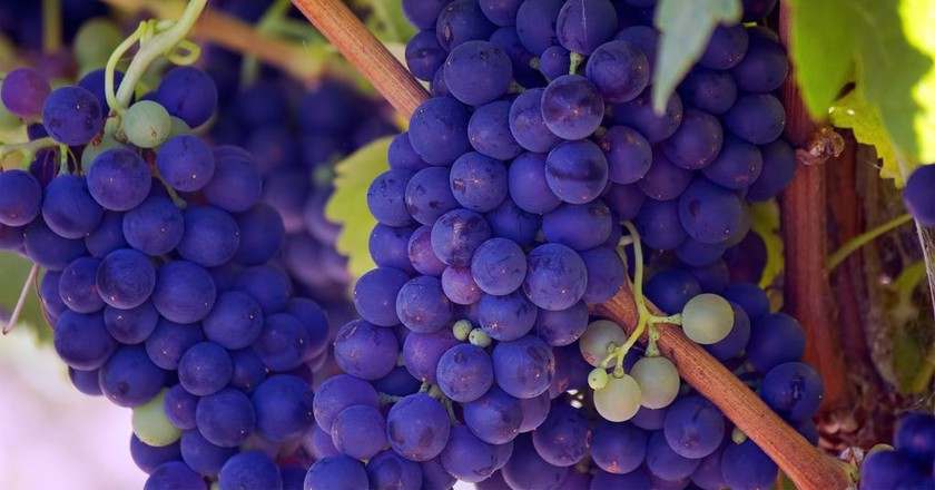 Wine harvest © Bill Williams / Unsplash