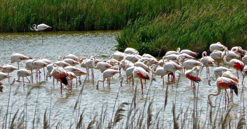 Flamingos, India | © MemoryCatcher / pixabay