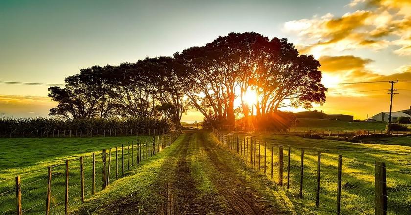 Rural New Zealand Landscape | © Pixabay
