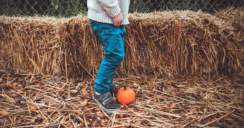 Halloween pumpkin patch | © Pixabay / Pexels