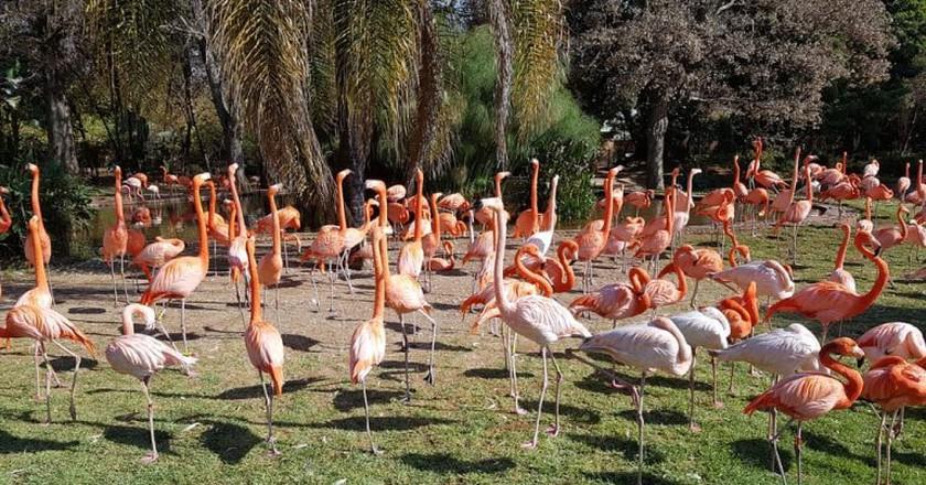 Pink flamingos at the Pretoria Zoo | © Suneé Jones