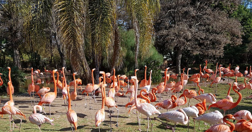 Pink flamingos at the Pretoria Zoo | © Suneé Jones