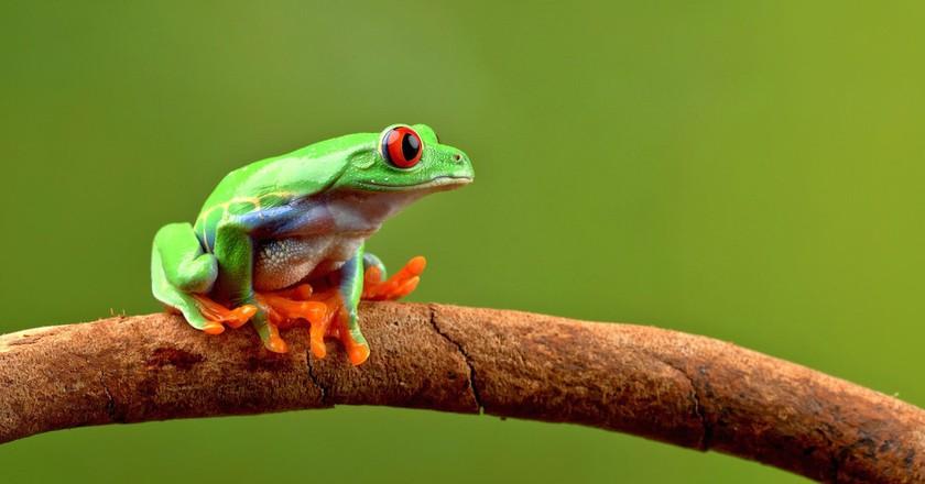 Rainforest mascot | © Tom Lee / Flickr