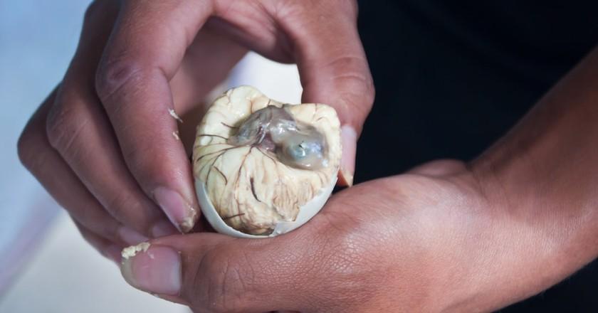 duck embryo | © Rangzen/ Shutterstock.com