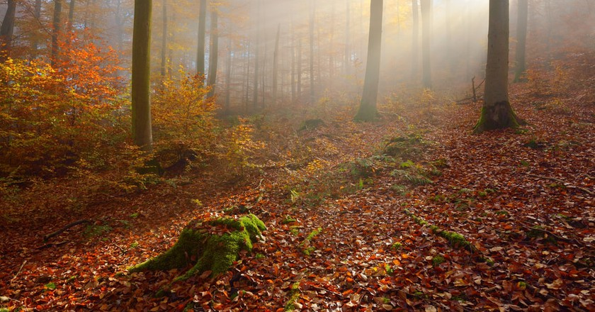 10 Things to Know Before Visiting the Hainich National Park, Germany