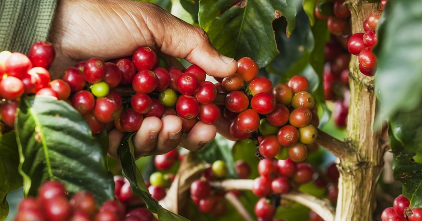 Colombian coffee | © Andres Navia Paz / Shutterstock
