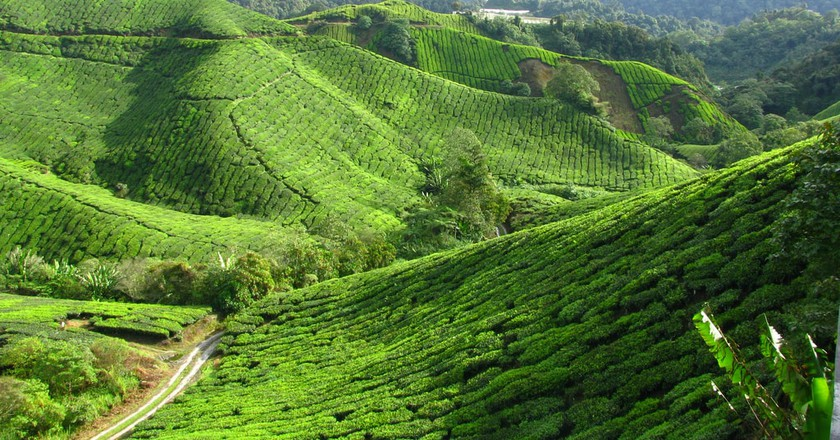 Tea Plantations in Cameron Highlands | © Qinrong Lim / Flickr