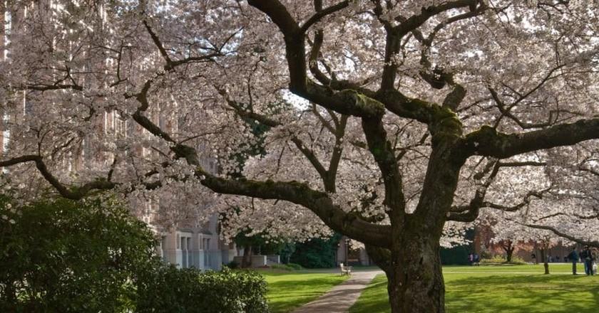 University of Washington Quad   © Steve Voght / Flickr