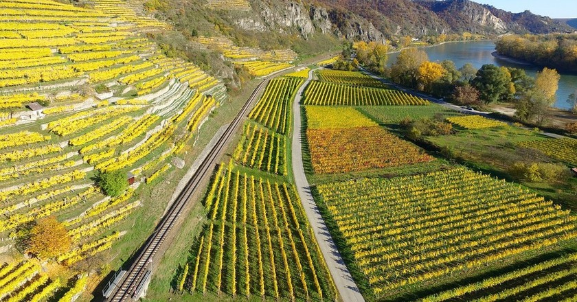 Vineyards in the Middle Rine |© Free-Photos/Pixabay
