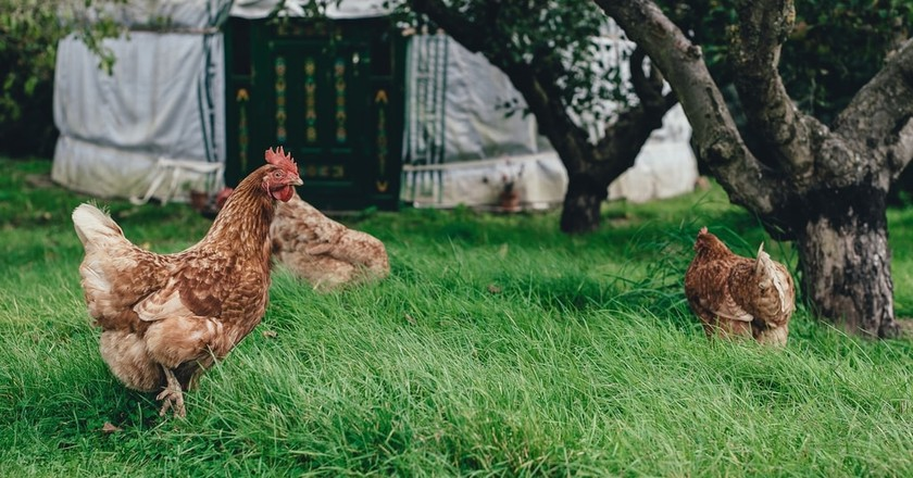 Farm Stays   © Annie Spratt/Unsplash