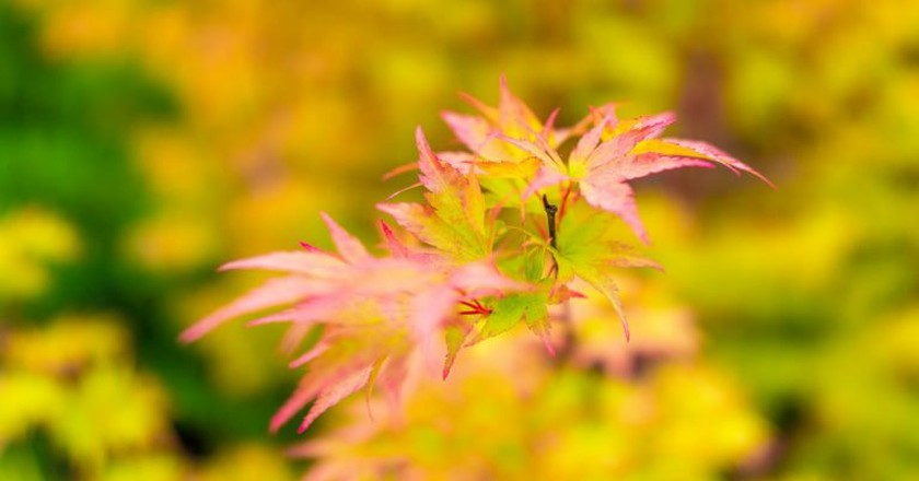Fall Foliage at the Seattle Center | © Tao Olezeski / Flickr